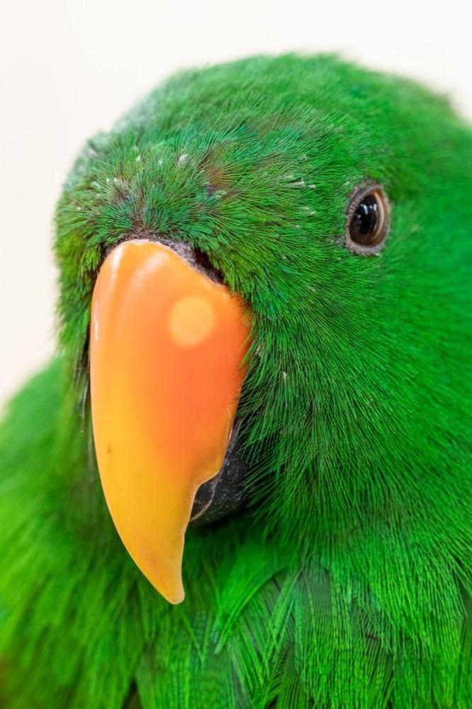 dinosaur-world-bird-park-16