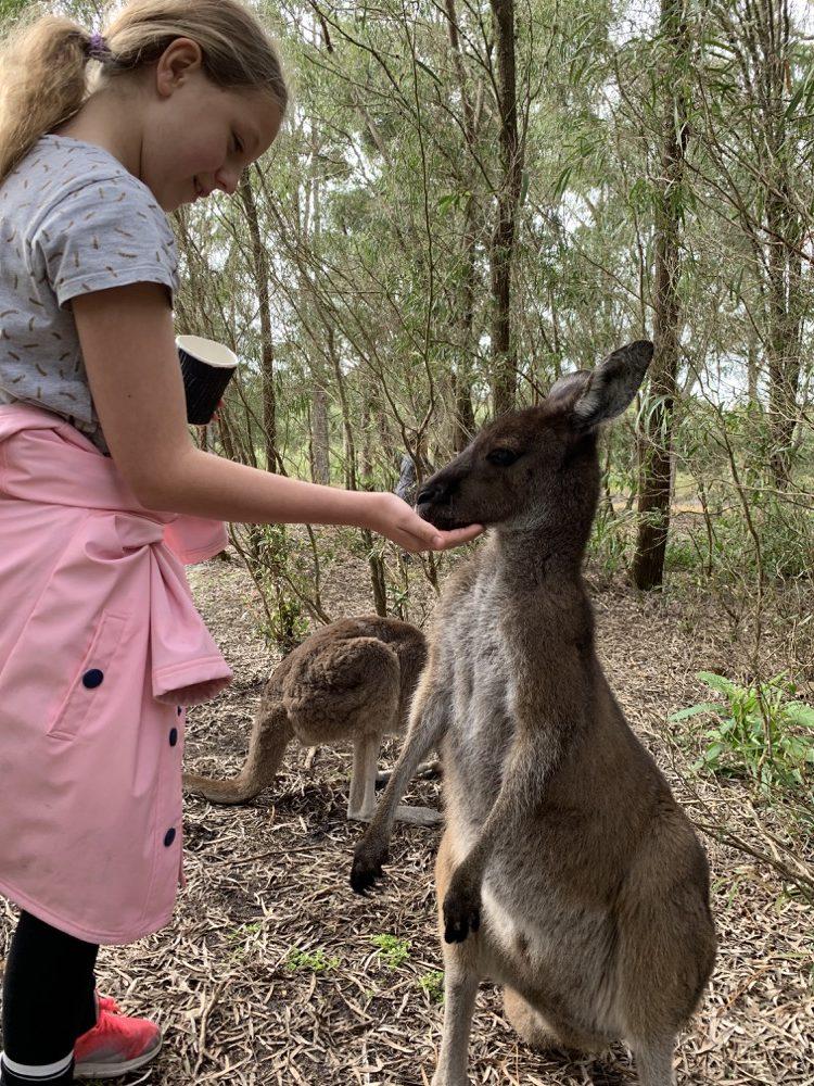 dinosaur-world-kangaroo-park-10