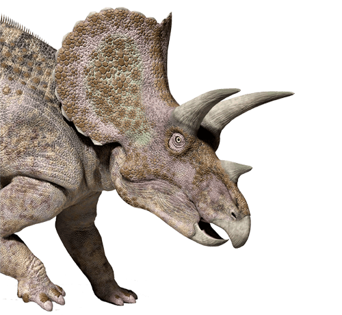 Home - Royal Gorge Dinosaur Experience