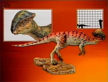 Пахицефалозавр: место