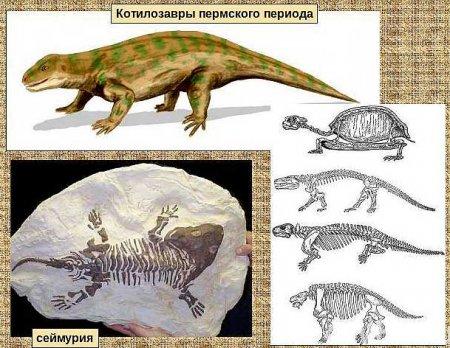 Эра котилозавров - одного из представителя парарептилий