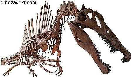 Динозавр с гребнем: скелет