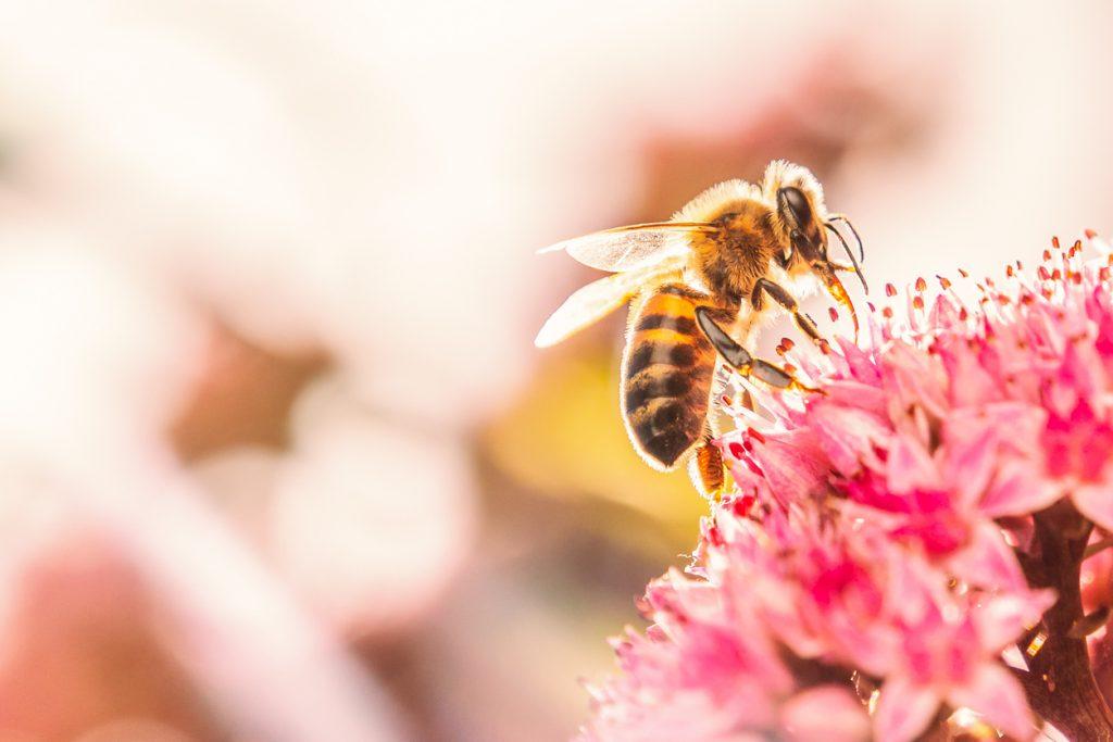 Родственники динозавров: пчелы