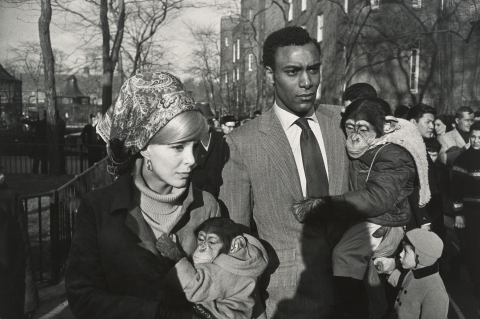 Central Park Zoo, New York, 1967. © Garry Winogrand
