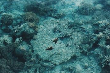 couple of fish ;) ikan aja punya pasangan...