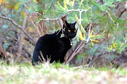 Cleo-and-the-wattle