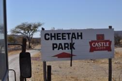 cheetah-park-nambia-0