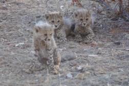 cheetah-park-nambia-659
