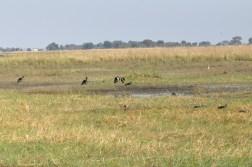 chobe-national-park-zimbabwe-289