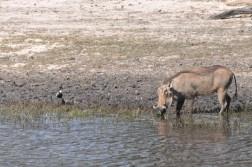 chobe-national-park-zimbabwe-323