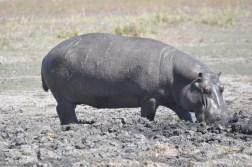chobe-national-park-zimbabwe-335