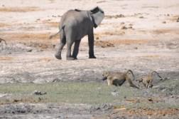 chobe-national-park-zimbabwe-413