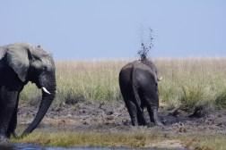 chobe-national-park-zimbabwe-946
