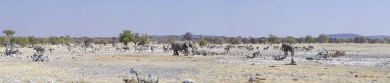 etosha-1-namibia