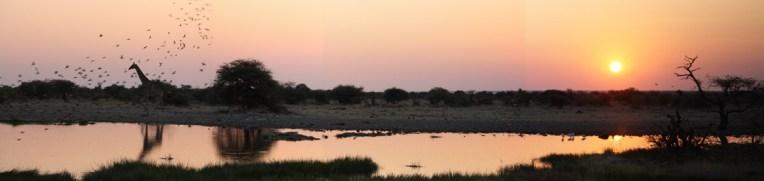 etosha-12-namibia