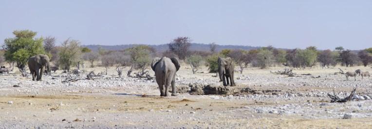 etosha-14-namibia