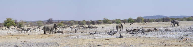 etosha-9-namibia