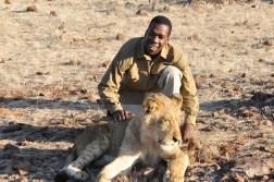 zimbabwe-lion-walk-110