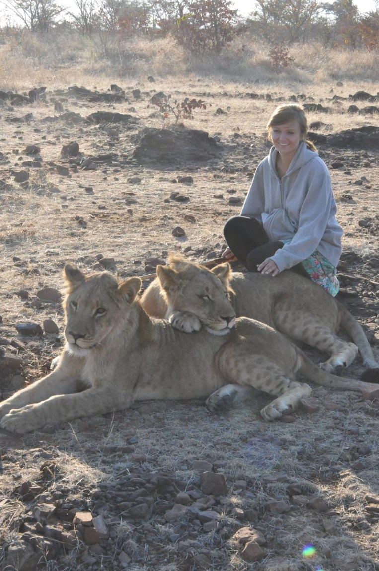 zimbabwe-lion-walk-146