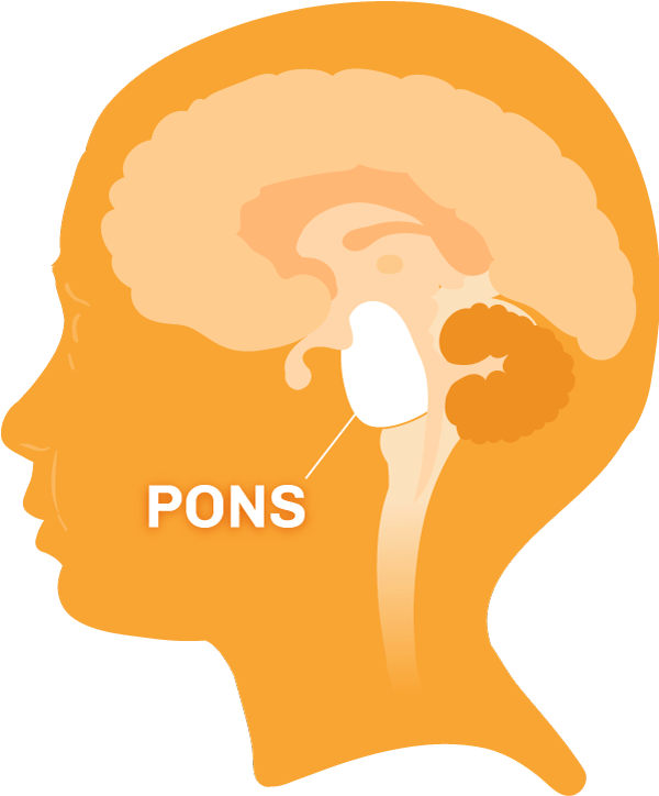 brain diagram pons ceiling fan switch wiring diagrams what is dipg of the with region highlighted