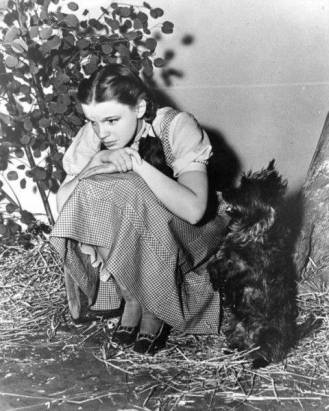 Terry the cairn terrier playing Toto, with Judy Garland as Dorothy, in The Wizard of Oz