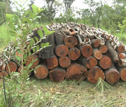Timber-Ghana