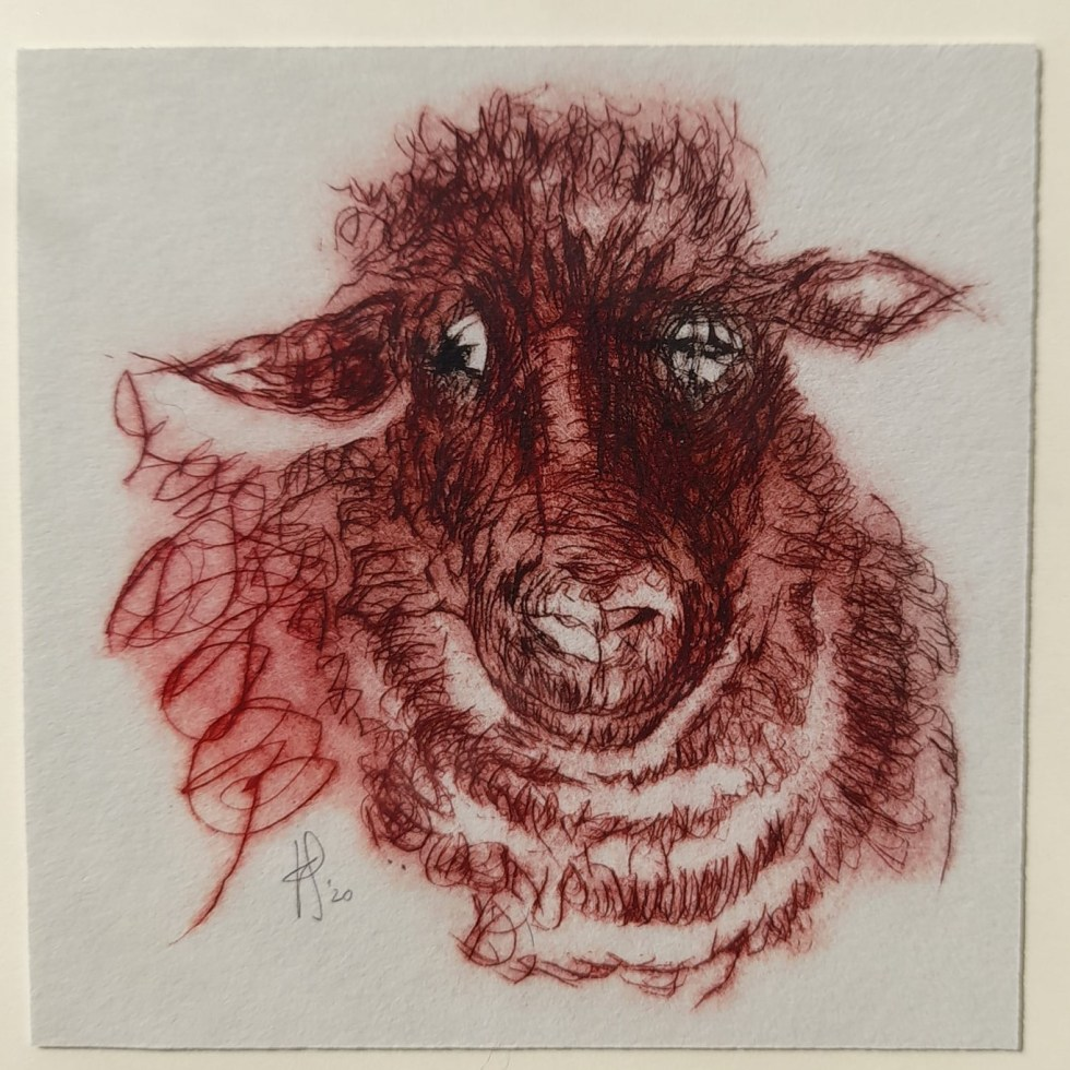 sheep red