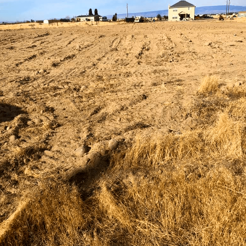 cleared and leveled ground