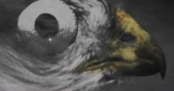 """Sonnymoon- """"Wild Rumpus"""" directed by Lauren Santorio"""