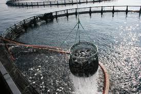 Nueva Escocia anuncia nuevas normas para una acuicultura más 'responsable y transparente'