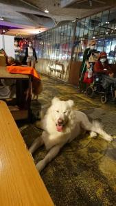MAJI集食行樂-印度香料王餐廳-狼犬來我們這裡坐