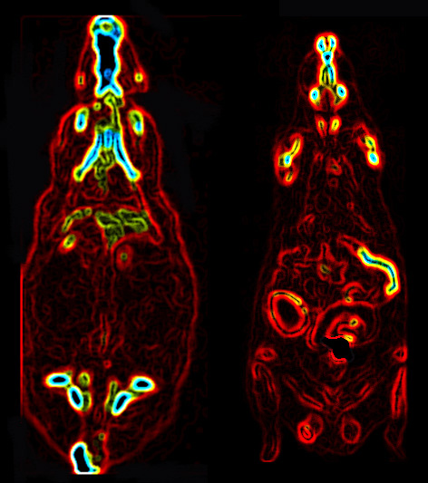 PET CT images of rats