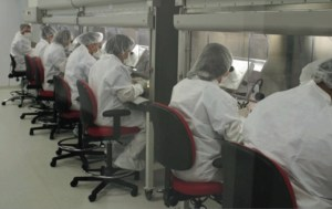 Line of technicians in protective clothing looking through microscopes to dissect salivary glands from irradiated mosquitoes.