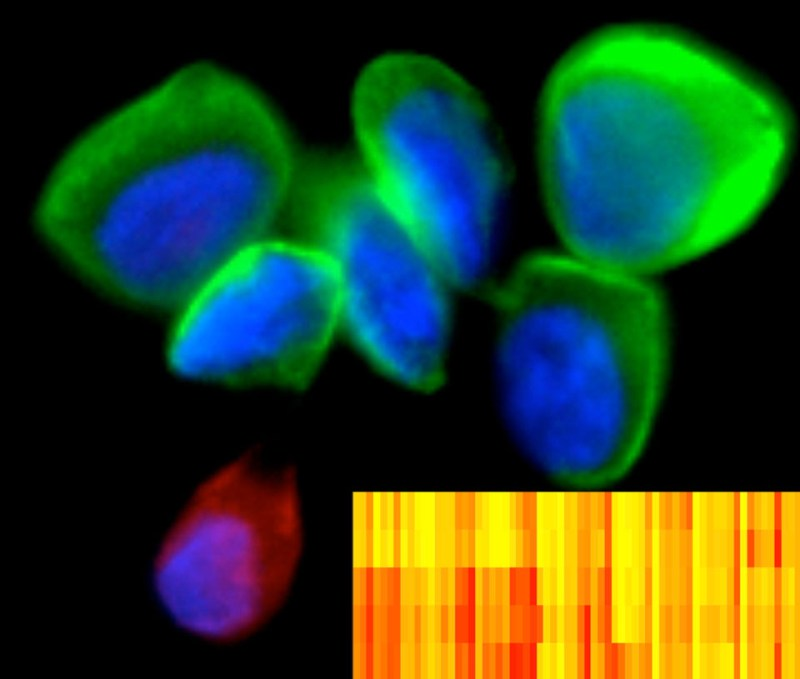 Blue and green blobs with one purple and red blob with a yellow and red striped box
