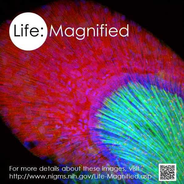 Poster for scientific images exhibit
