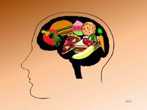 Brain on Food