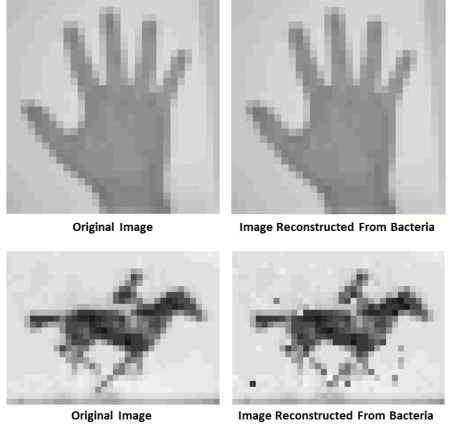 Original vs. CRISPR stored images