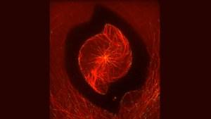 Cytoskeletal Storm