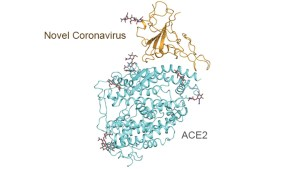 SARS-Cov-2 Molecular Map