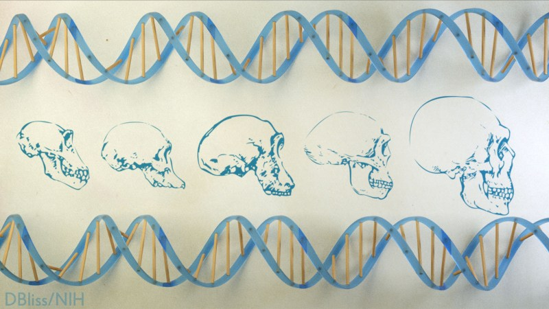 DNA runs across the top and bottom. Skulls show the evolution of man from left to right