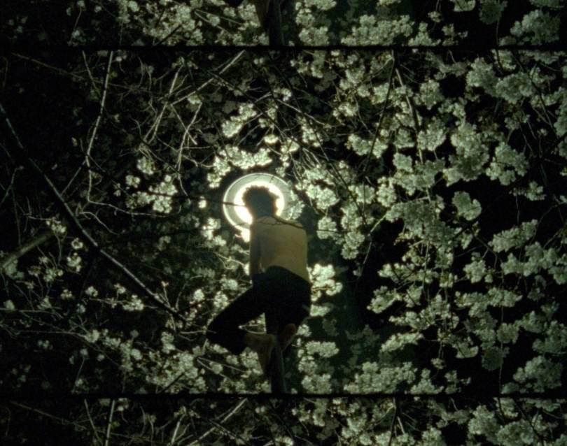 Moth a Short Film by Mackenzie Sheppard