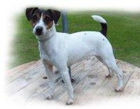 Jersey Dog Seeks Bedbugs | Directory.ac