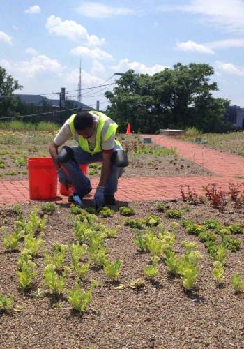 A green roof that was installed over an existing drinking water reservoir located at Fort Reno as part of the Clean Rivers Project / American Academy of Environmental Engineers and Scientists