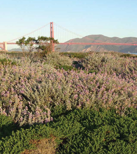 Crissy Field, San Francisco /