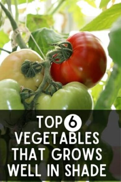 Top 6 Vegetables That Grows Well In Shade