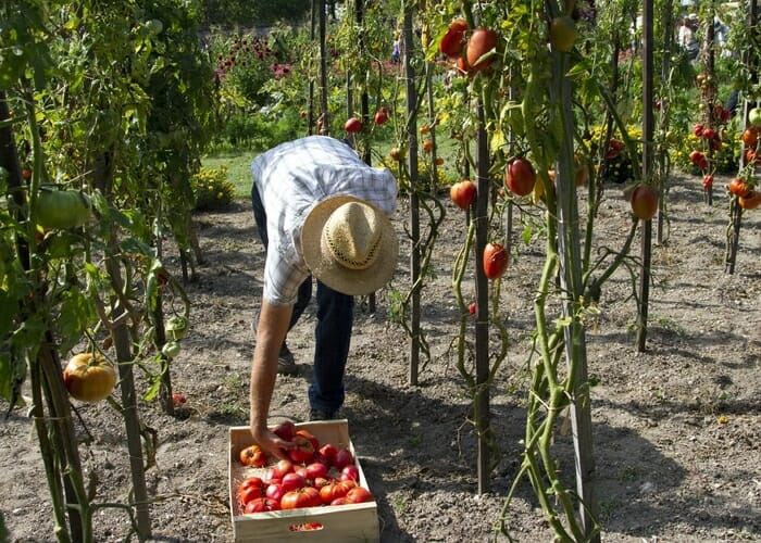 How To Get More Fruits and Vegetables From Your Garden