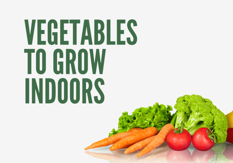 Here Are Some Of The Easiest Vegetables To Grow Indoors
