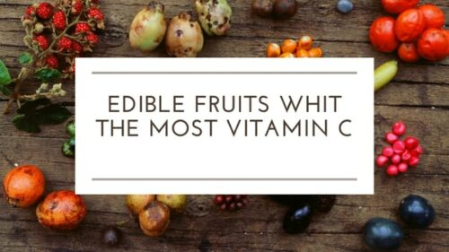 Fruits That Have The Most Vitamin C Within Them