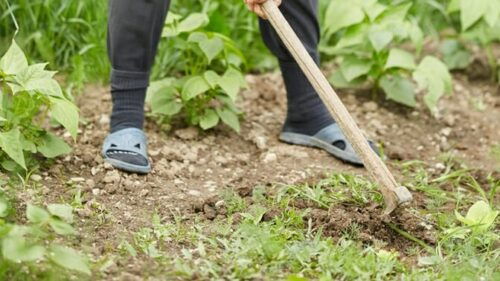 Here's How To Get Rid Of Unwanted Weeds In The Garden