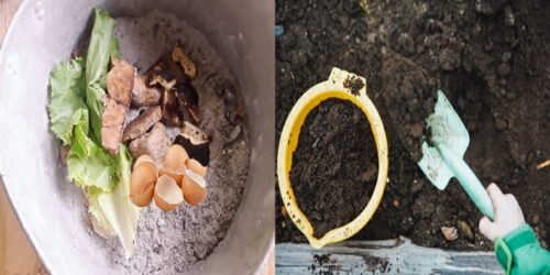 How To Make Homemade Organic Compost For Plants?